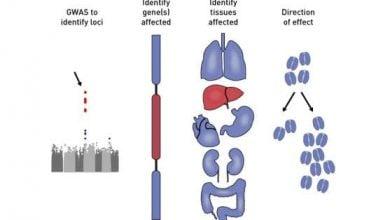 Photo of تبدیل خطر به پیش بینی در دیابت نوع 2