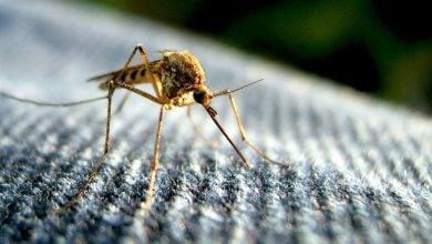 Photo of برخورد تکامل و بیوتکنولوژی