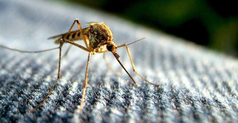 When evolution and biotechnologies collide - اخبار زیست فن