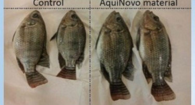 افزودنی جدید در خوراک ماهی باعث افزایش رشد میشود - اخبار زیست فناوری