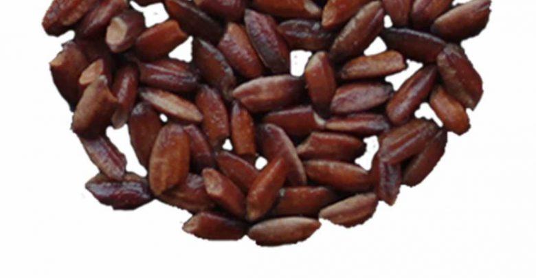 برنجهای ارغوانی غنی از آنتیاکسیدان - اخبار زیست فناوری