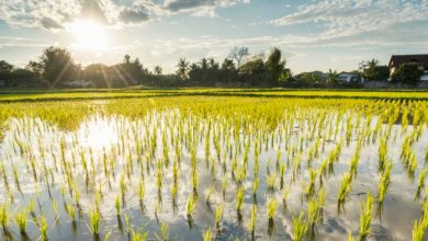 Photo of استفاده از انرژی خورشید برای تولید کود در زمین کشاورزی