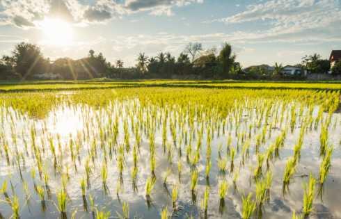 استفاده از انرژی خورشید برای تولید کود در زمین کشاورزی - اخبار زیست فناوری