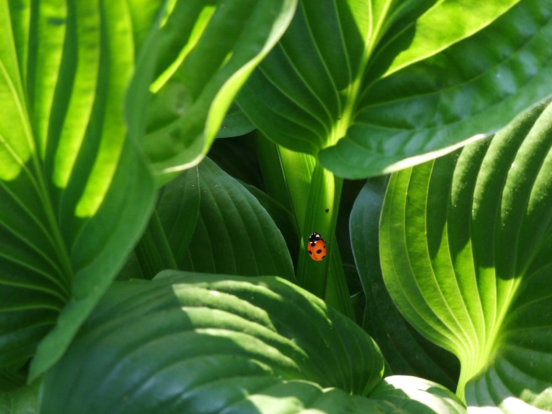 رویکردی جدید برای پی بردن به پتانسیل ژنتیکی دیواره ی سلولی گیاه