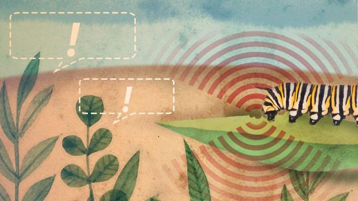 گیاهان برای کمک همسایگان خود با 112 تماس میگیرند!