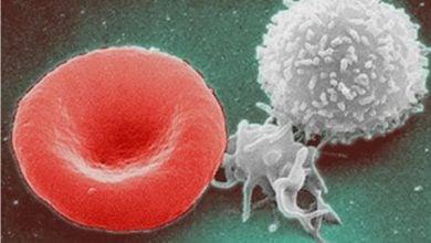 Photo of بازسازی سیستم ایمنی بدن به واسطه امساک از خوردن به مدت سه روز