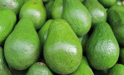 Smashing the avocado production bottleneck - اخبار زیست فن