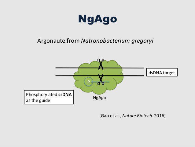 تکنیک NgAgo