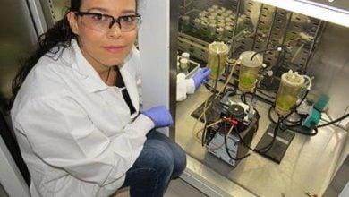 Photo of تکنیک جدید کاشت جلبک به منظور پیشرفت سوختهای زیستی