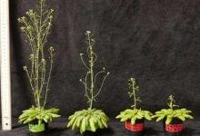 افزایش بهره وری فتوسنتز با کشف افزایش دهنده ها - اخبار زیست فناوری