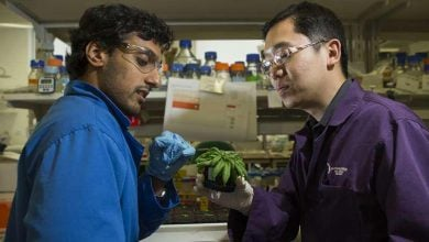 Photo of کمک به زنده ماندن گیاه در تنش خشکی