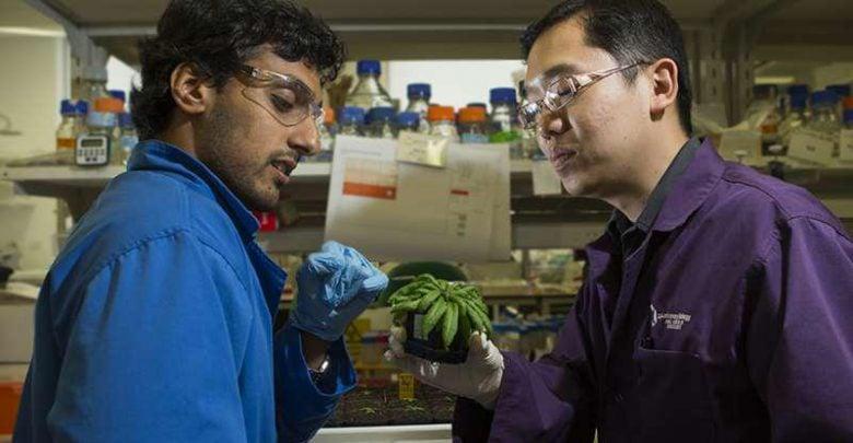 کمک به زنده ماندن گیاه در تنش خشکی - اخبار زیست فناوری