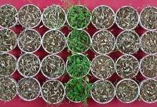 Photo of سرکه، یک راه ساده و ارزان برای کمک به گیاهان جهت مقابله با تنش خشکی