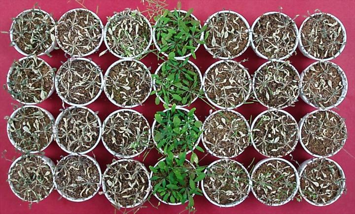سرکه، یک راه ساده و ارزان برای کمک به گیاهان جهت مقابله با تنش خشکی