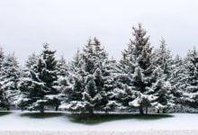 رشد سریعترِ درختان بهتر - اخبار زیست فناوری