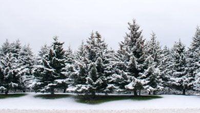 Photo of رشد سریعترِ درختان بهتر