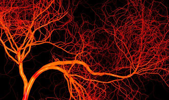 هورمون لپتین و آنژیوژنز - اخبار زیست فناوری