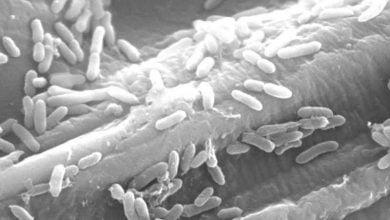 Photo of ردیابی فرایند تخمیر در باکتریهای تولیدکننده الکتریسیته