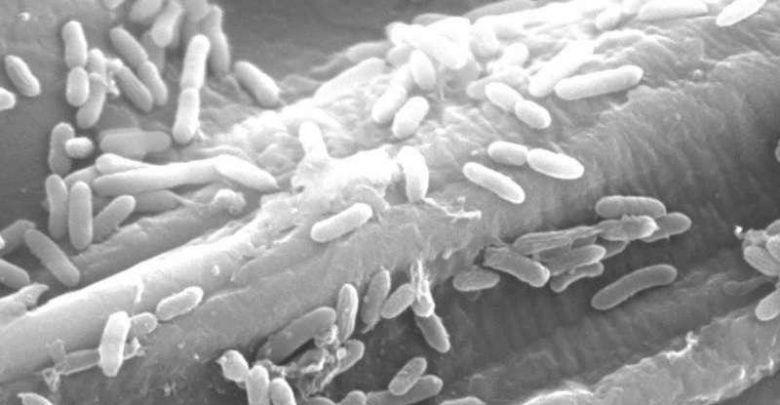 ردیابی فرایند تخمیر در باکتریهای تولیدکننده الکتریسیته - اخبار زیست فناوری
