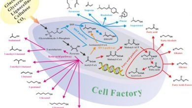 Photo of کارخانههای سلولی بهتر جهت تولید داروهای نوین