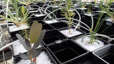 Photo of میکرو اورگانیسمهای خاک، بهوجود آورنده و حافظ تنوع گیاهی