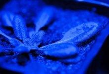 Photo of گیاهان رخدادهای آب و هوایی تنشزا را برای بازیابی سریع خود فراموش میکنند