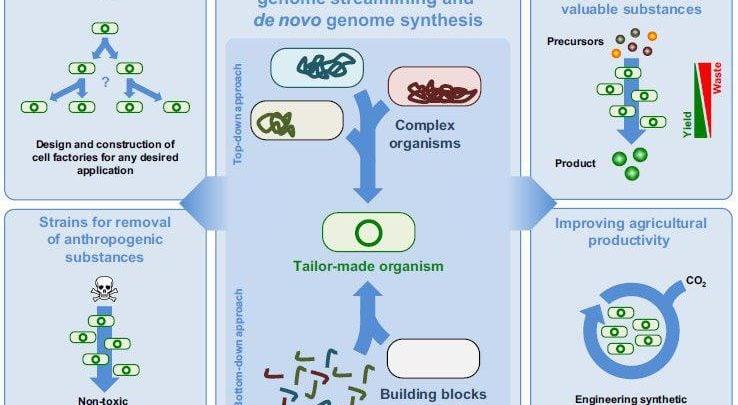 سهم مهندسی ژنوم در توسعه پایدار - اخبار زیست فناوری