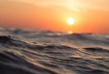 Photo of جلبکها برای نجات دریاها