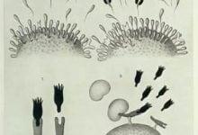 "Photo of تاریخچه مونوکلونال آنتیبادیها: ""گلولههای جادویی"" ایمنیدرمانی"