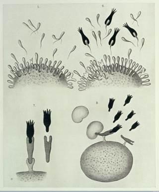 """تاریخچه مونوکلونال آنتیبادیها: """"گلولههای جادویی"""" ایمنیدرمانی"""