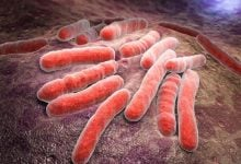 Antibacterial combination could fight drug-resistant tuberculosis - اخبار زیست فن