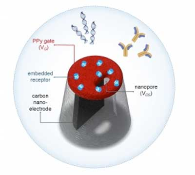 Copying nature's lock-and-key system could improve rapid medical diagnostics - اخبار زیست فن