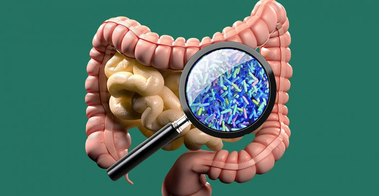 Could modifying gut microbes prevent or delay type 1 diabetes - اخبار زیست فن