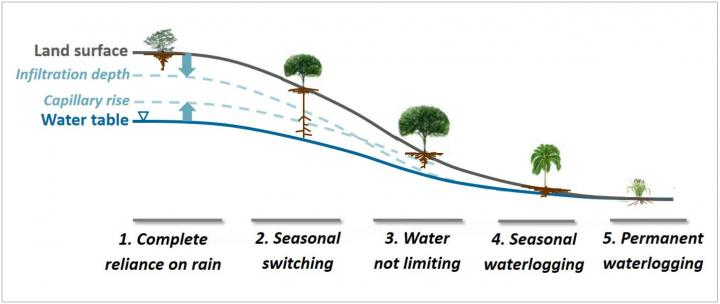 Deep roots in plants driven by soil hydrology - اخبار زیست فن