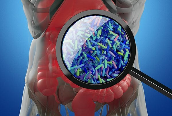 Gene Therapy for the Bacteria of Our Microbiome Could Improve Our Health - اخبار زیست فن