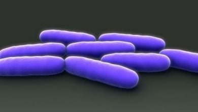 Photo of Gut bacteria that 'talk' to human cells may lead to new treatments