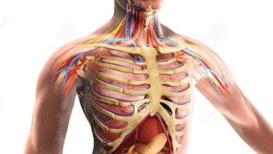 Photo of تنظیم زمان بندی فرآیندهای بدن توسط دستگاه مولکولی ژنراتور بیوشیمیایی