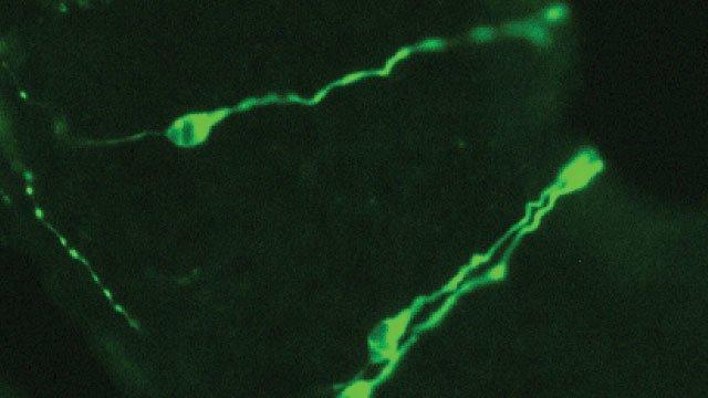 How Immune Receptors Got Into Mouse Noses - اخبار زیست فن