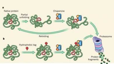 Photo of مبارزه پروتئین حاوی لایزین در مقابل پنبه