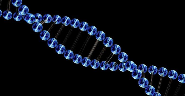 Microscope invented at Marine Biological Laboratory illuminates chromosomal dark matter - اخبار زیست فن