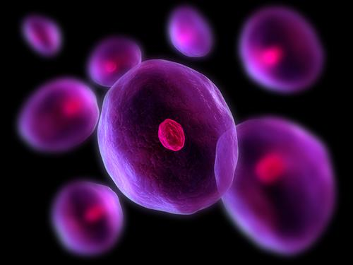 New Zealand researchers makes 'natural born killer' cell discovery - اخبار زیست فن