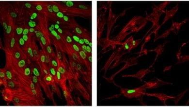 Photo of از بین بردن ویروس ها توسط Epigenetic