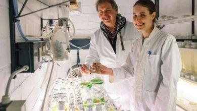 Photo of چگونگی ساخت آنزیم هیدروژناز در جلبکهای سبز