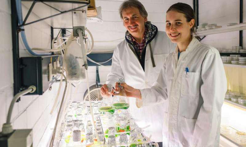 چگونگی ساخت آنزیم هیدروژناز در جلبکهای سبز - اخبار زیست فناوری