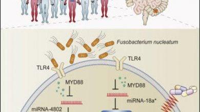 Photo of باکتریها میتوانند باعث مقاومت به شیمیدرمانی شوند