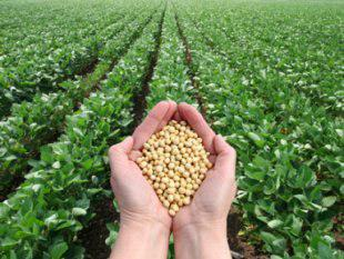آمریکاییها موافق با محصولاتGM برای مراقبتهای بهداشتی، ولی همچنان محتاط درمورد غذا