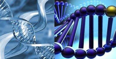 Photo of زیربنای ژنتیکی اختلالهای تغذیهای