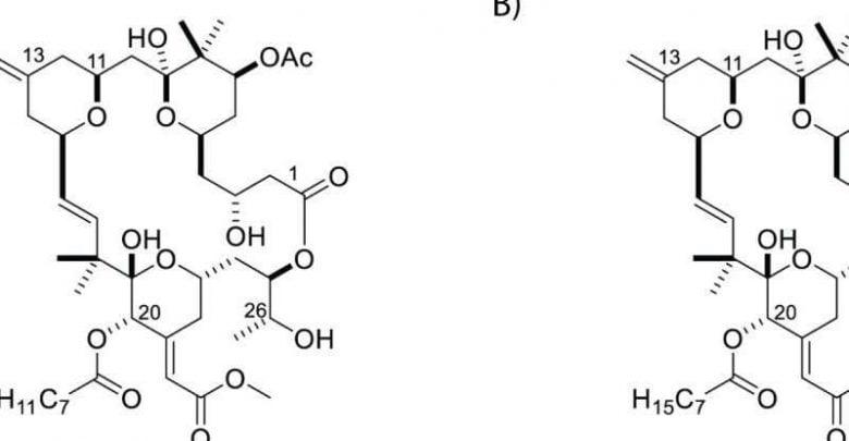 ساخت مادهای برای فعالسازی و از بین بردن سلولهای آلوده به HIV خفته - اخبار زیست فناوری