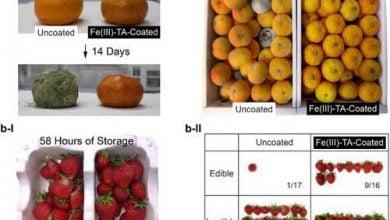 Photo of اسپری ضد میکروبی نانو کامپوزیت ، عمر مفید محصول را افزایش میدهد