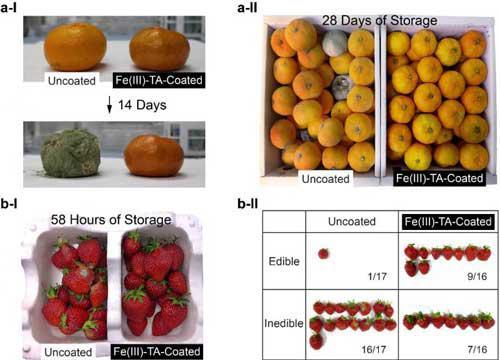 اسپری ضد میکروبی نانو کامپوزیت ، عمر مفید محصول را افزایش میدهد - اخبار زیست فناوری